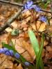 Диворастящи пролетни цветя